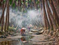 https://sites.google.com/a/dcvnps.org/vnps-dev/gallery/member-s-gallery/mtan-Foggy-Palm-Trees.jpg